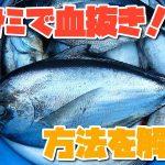 釣りの魚をハサミで血抜きする方法とは?鮮度を保つ6つのコツを解説